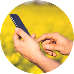 Man accessing the internet on his phone infront of a field of canola