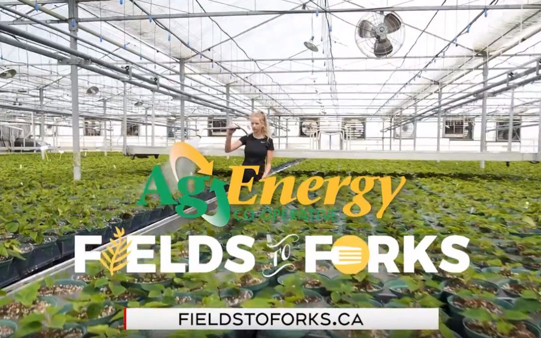 New Commercial with Fields to Forks!